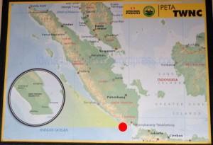 Peta Tambling Wildlife Nature Conservation (TWNC)