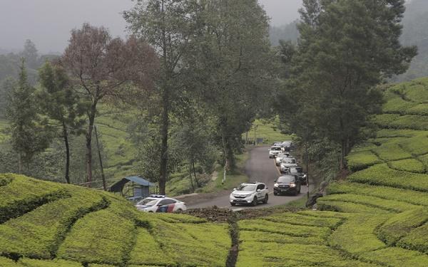 Menuju Situ Paenggang melewati jalur berkelok dan perkebunan teh yang asri. Ist